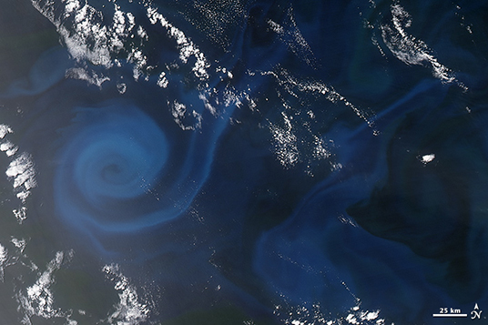 Spiral of Plankton